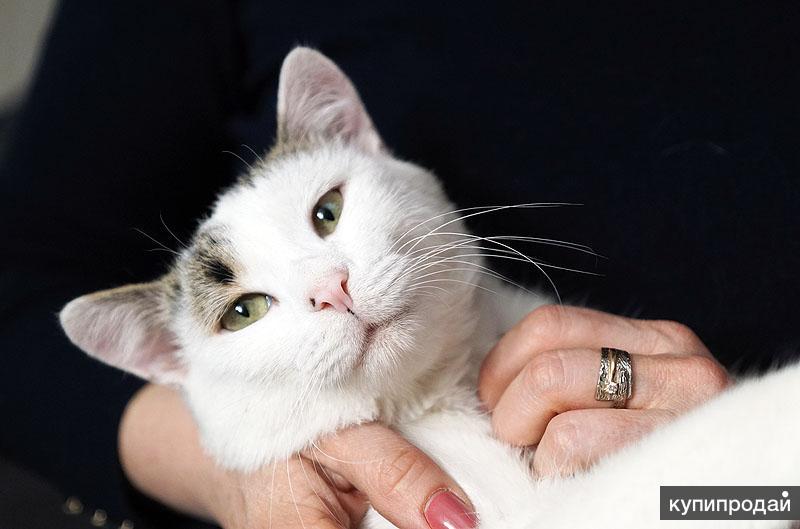 ласковый котик Вася
