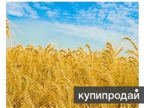 Продаю пшеницу 4 класс. 8 тыс. т.