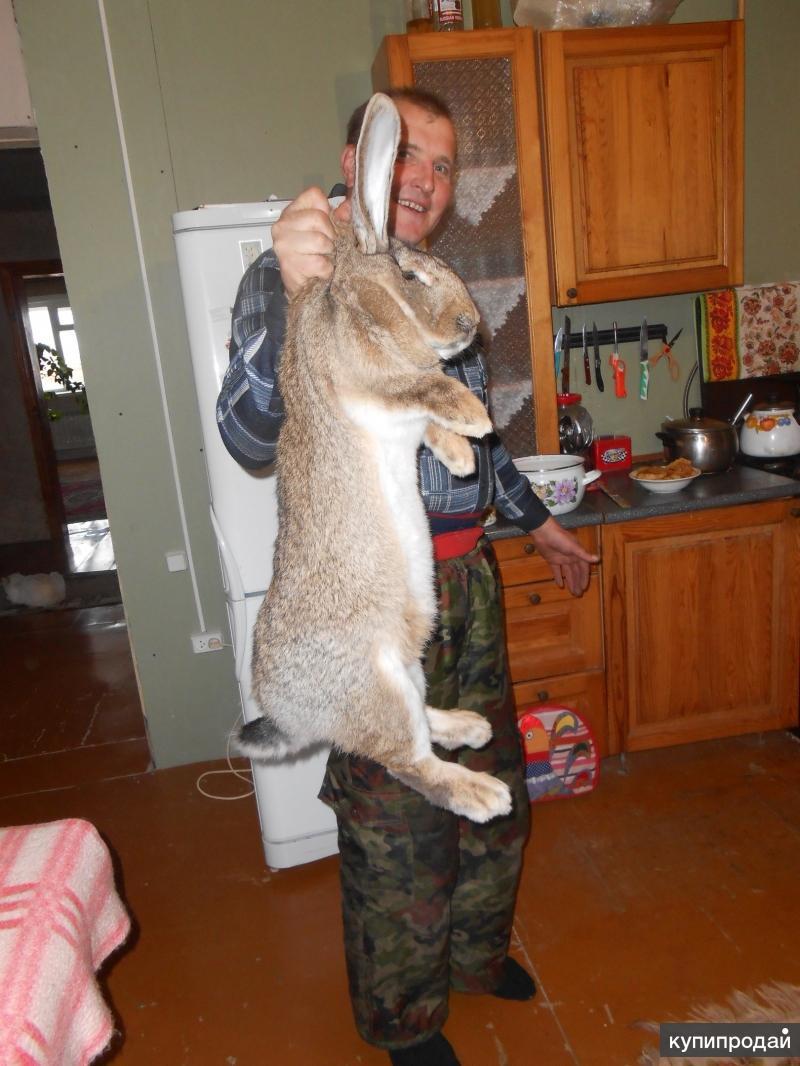 Племенные и образцовые кролики различных пород и окрасов!!!!!