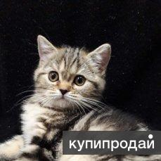 КРАСАВИЦА ГРЕЙСИ