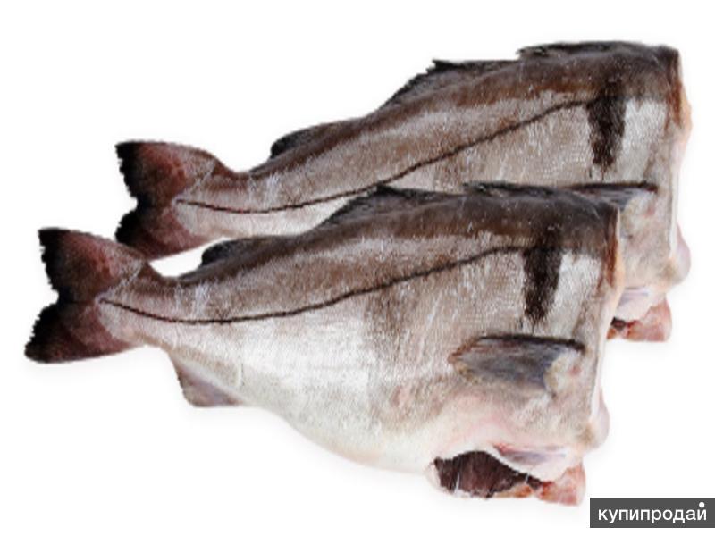 Рыба свежемороженая оптом!