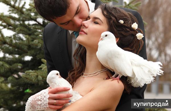 Белые голуби на свадьбу, фотосессии, дни рождения, выпускной!