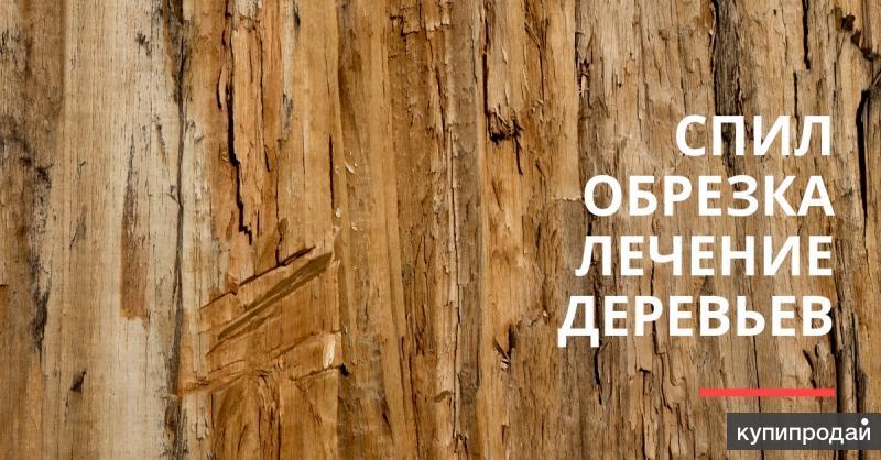 Спил и обрезка деревьев по Крыму