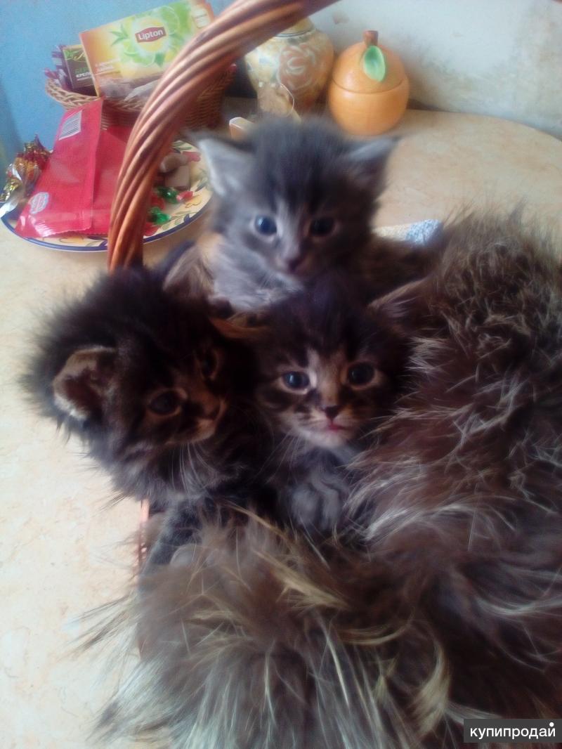 Отдадим в хорошие, добрые руки пятерых очаровательных котят