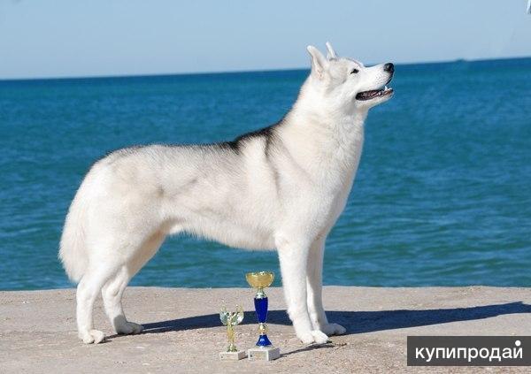 Продаются красивые,здоровые щенки.