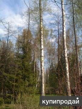 Продается участок 15 соток, 31 км от МКАД по Минскому шоссе. В тихом месте!