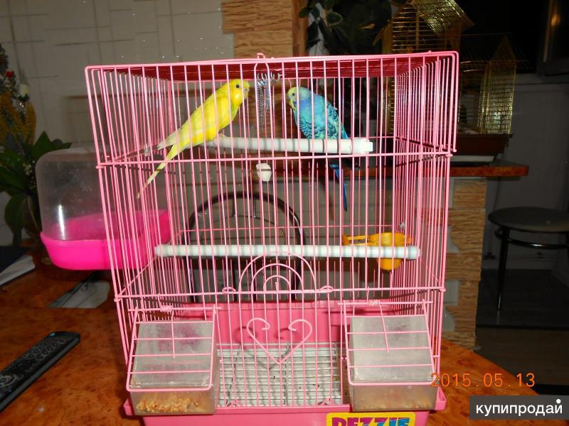 Продается 2 попугая самка и самец с клеткой