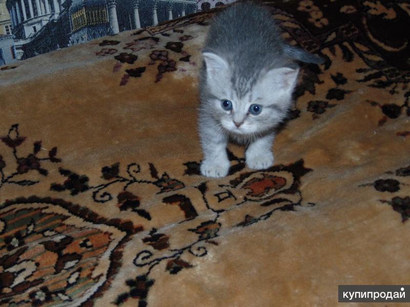 котятки ищут нового хозяина.