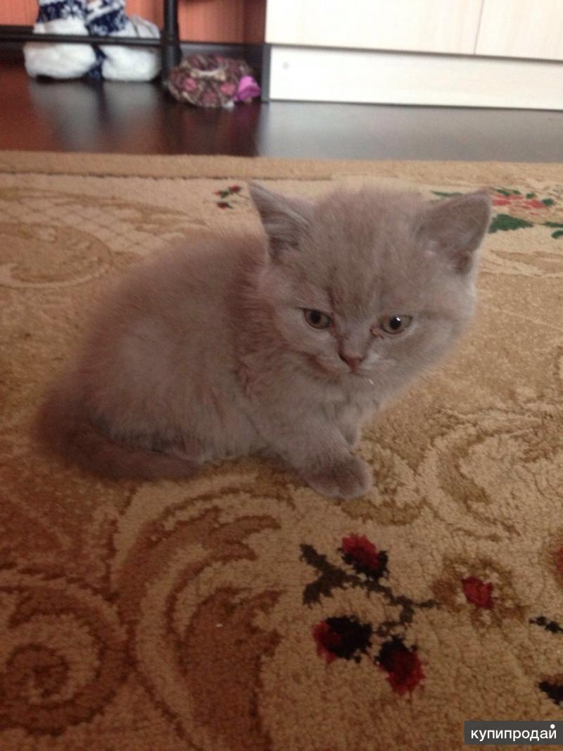 Продаю котят 2000 руб