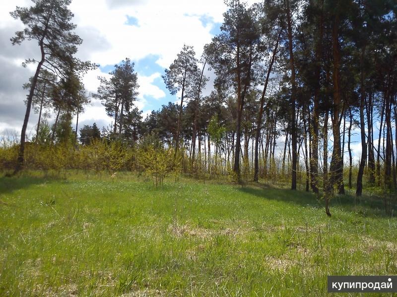 уч-к 100 сот., п.Никольское,  с сосновым лесом и собственным прудом.