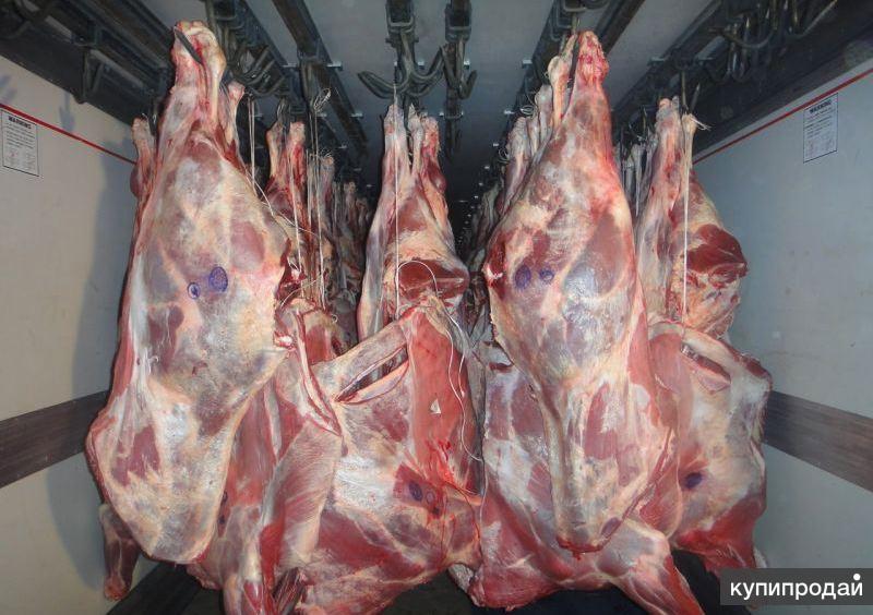 Поставщики мяса в москве мелкий опт