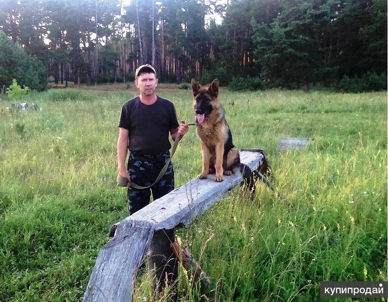 Дрессировка собак инструктором служебного собаководства