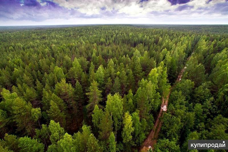 Услуги в сфере лесного хозяйства