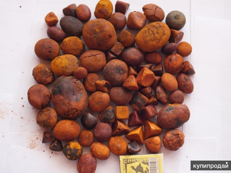 Куплю желчные камни крупного рогатого скота (КРС)