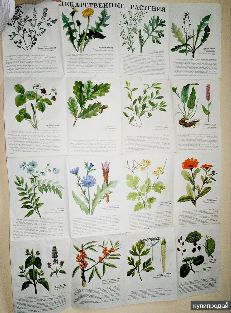 атлас травянистых цветов картинки это