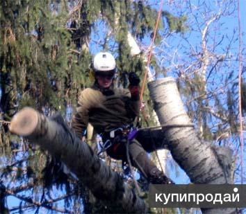 Удаление, спил  кронирование деревьев в Пушкино и Пушкинском районе