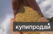 Семена амаранта