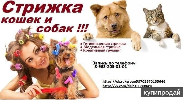 Стрижка собак и кошек !