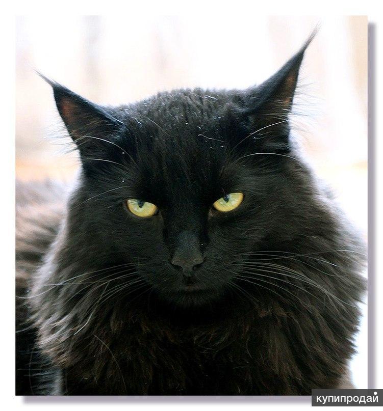 Шикарный кот Мишка!