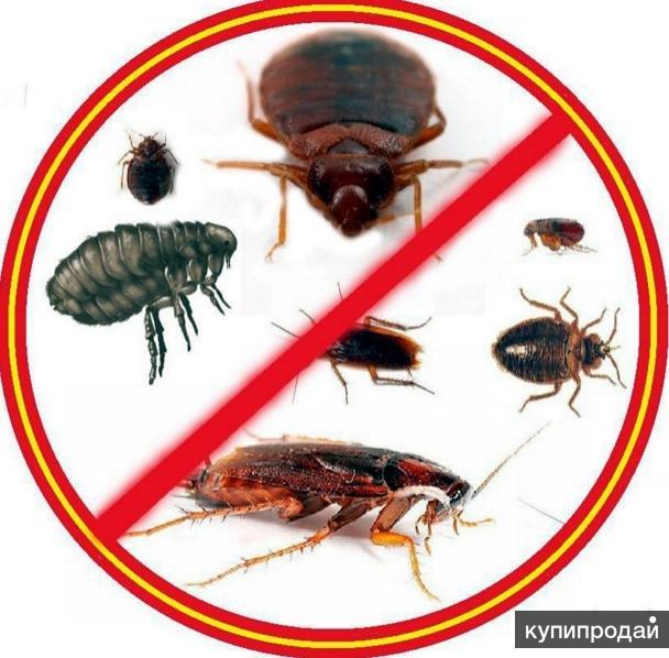 Уничтожение клопов, клещей, тараканов, грызунов