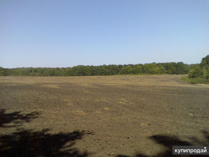 Продам без посредников земельный участок 23,3га между лесами.