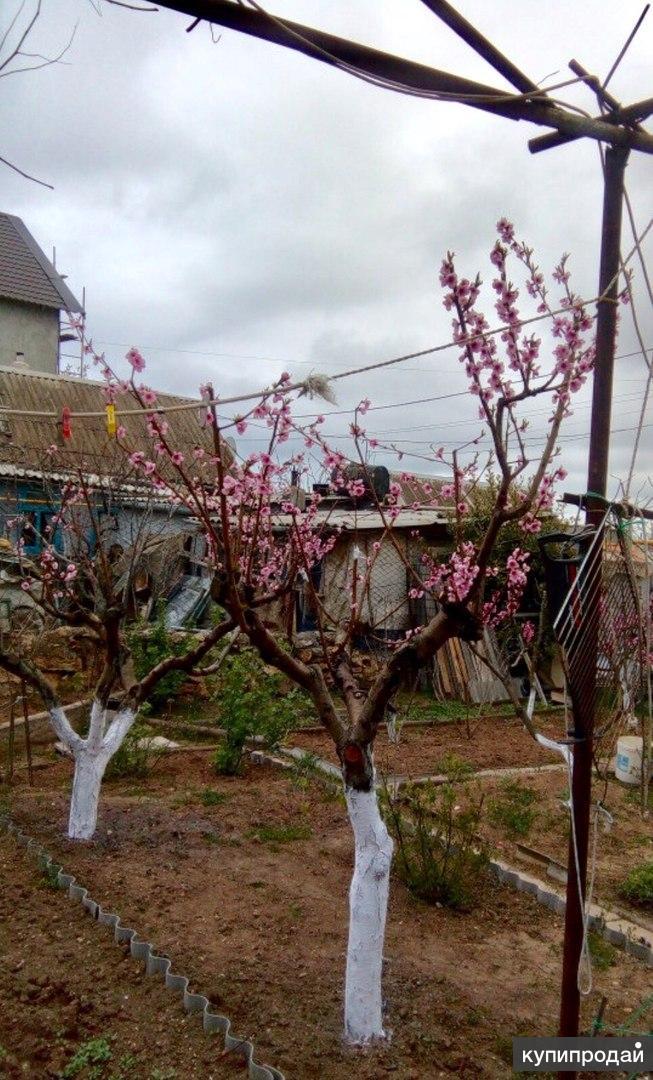 Дача с жилым домиком и садом в Казачей бухте