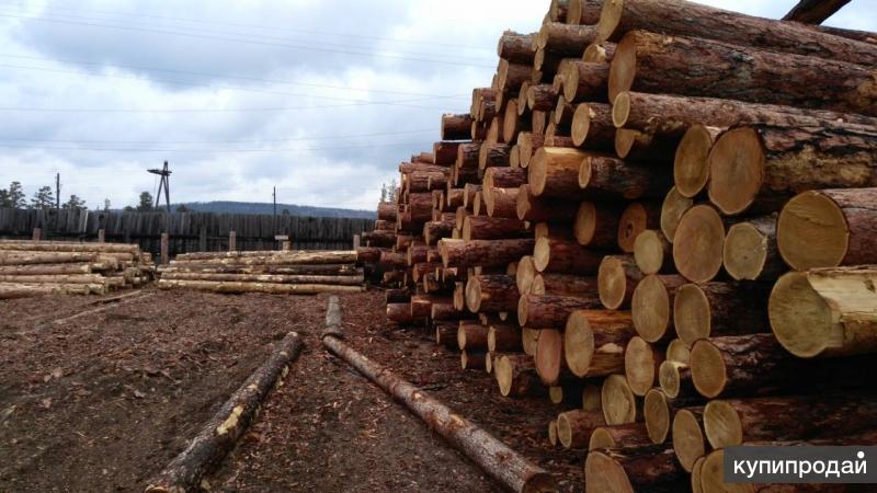 Продаем лес кругляк Сосны, Лиственницы