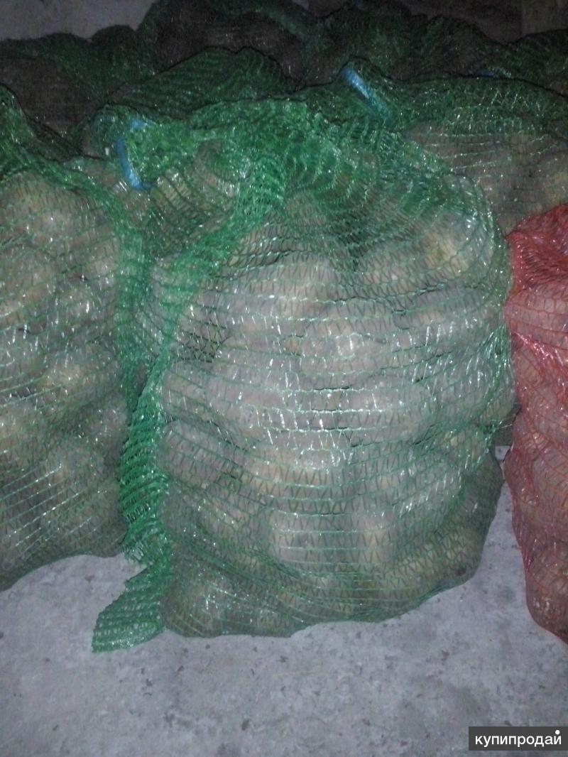 ПРОДАМ картофель (в сетках)