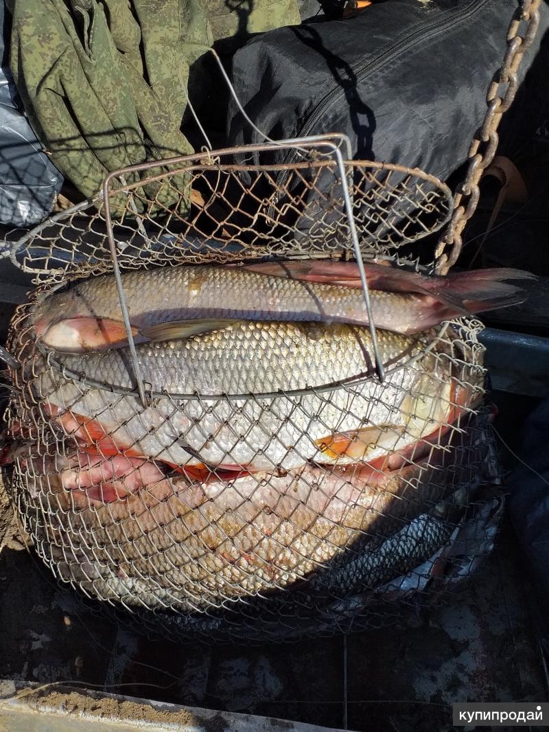 Рыба свежемороженная Язь