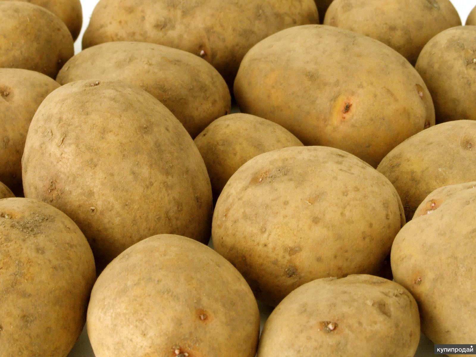 Картофель оптом !!!
