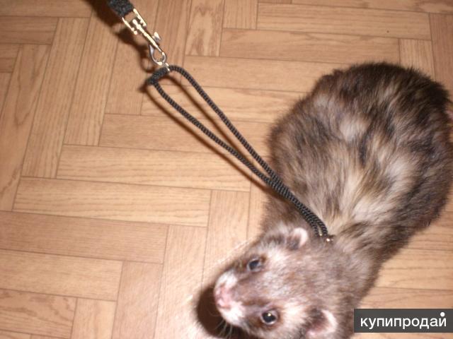 продаю регулируемые шлейки для хорьков кошек и др мелких животных