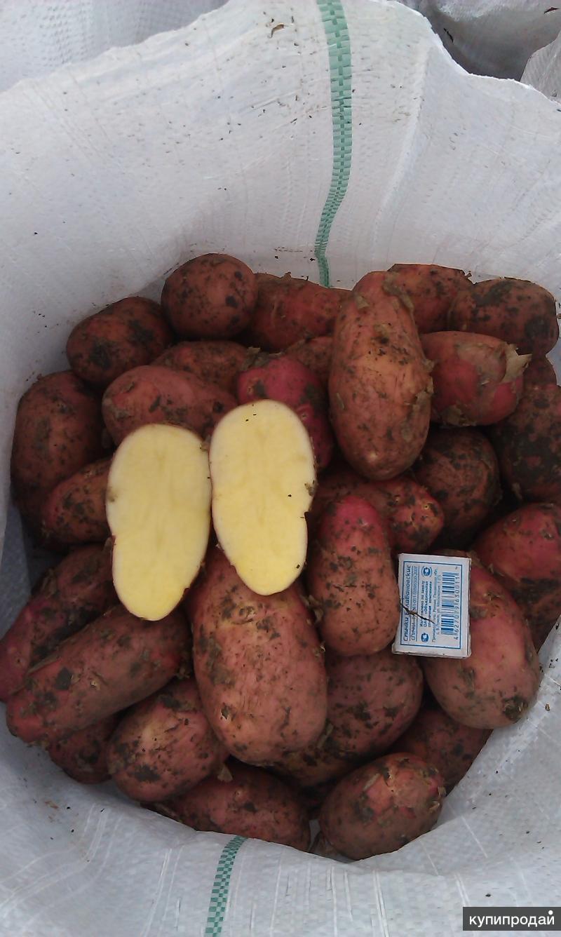 Продаем картофель оптом от производителя