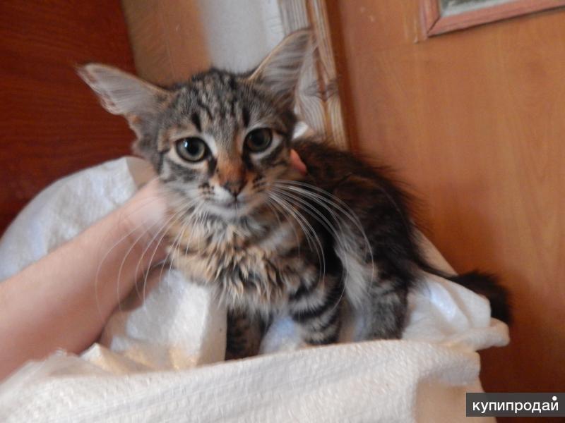 Котёнок в самые надёжные и добрые руки