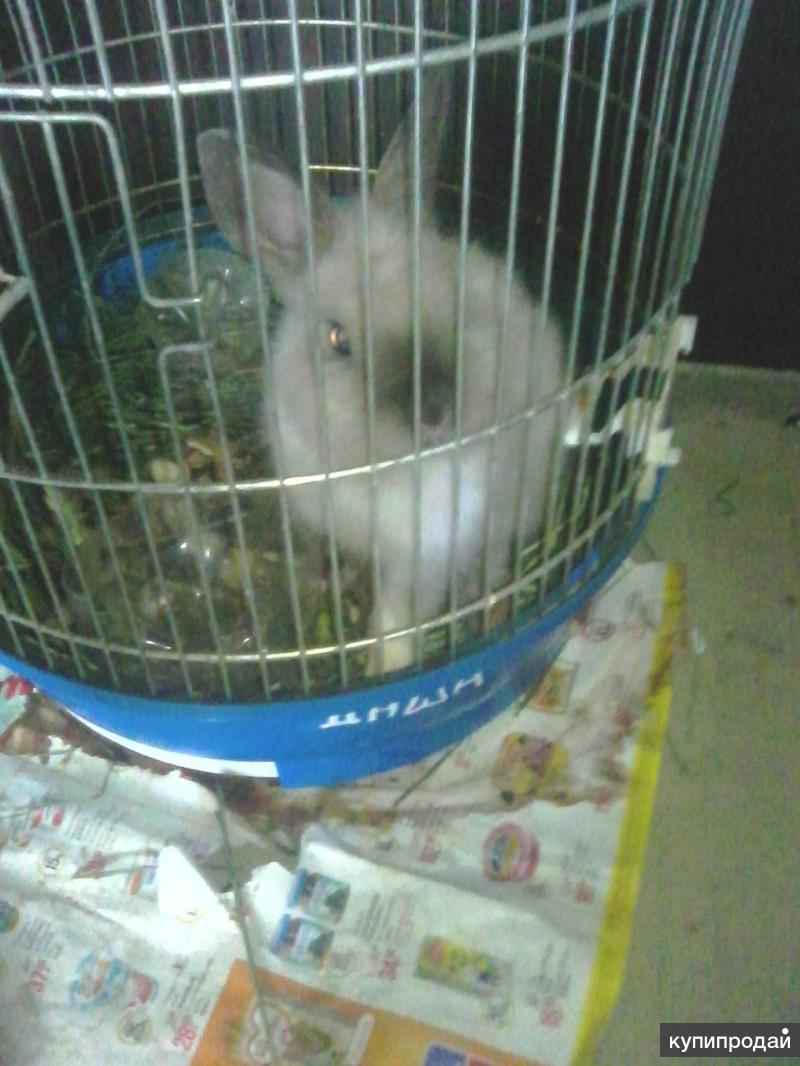 Продам срочно кролика