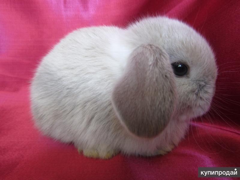"""Хотите купить карликового кролика в Москве в питомнике?  """"Зайкина усадьба"""""""