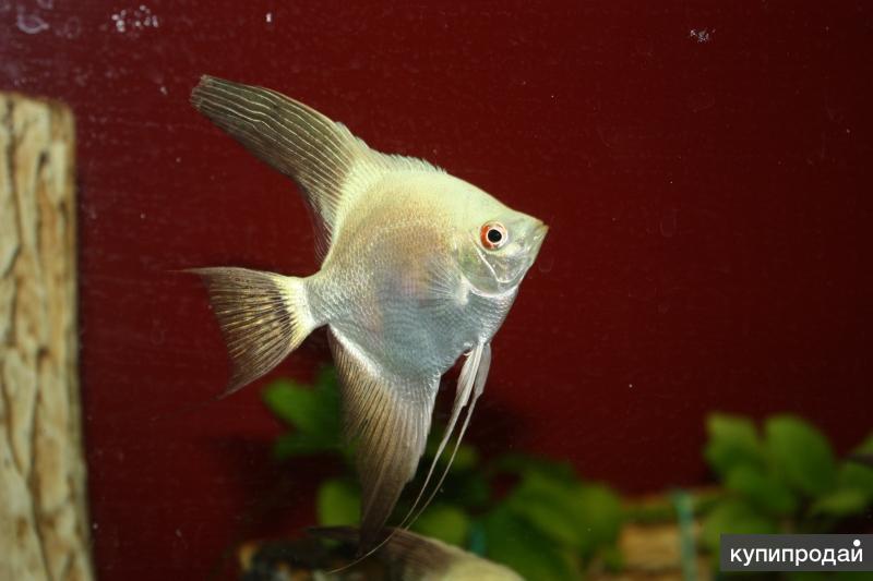 Обслуживание  аквариума,  дизайн,  лечение