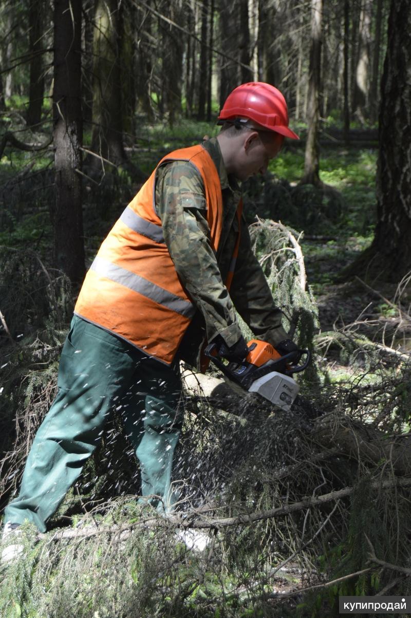 фотографии: Прикольный кто занимается опиливанием деревьев выращивания