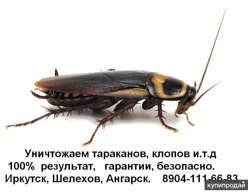 Травим насекомых, (тараканы, постельные клопы, клещи, и пр )