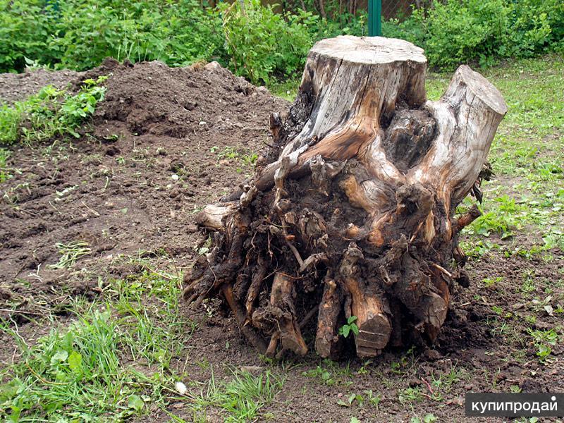 Спил деревьев, выкорчевка пней.