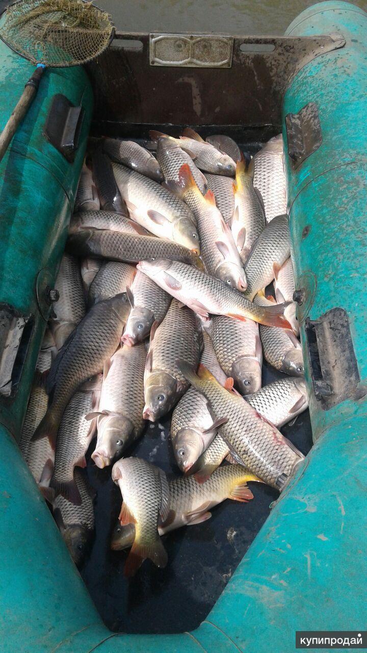 Свежая Ханкайская рыба под заказ