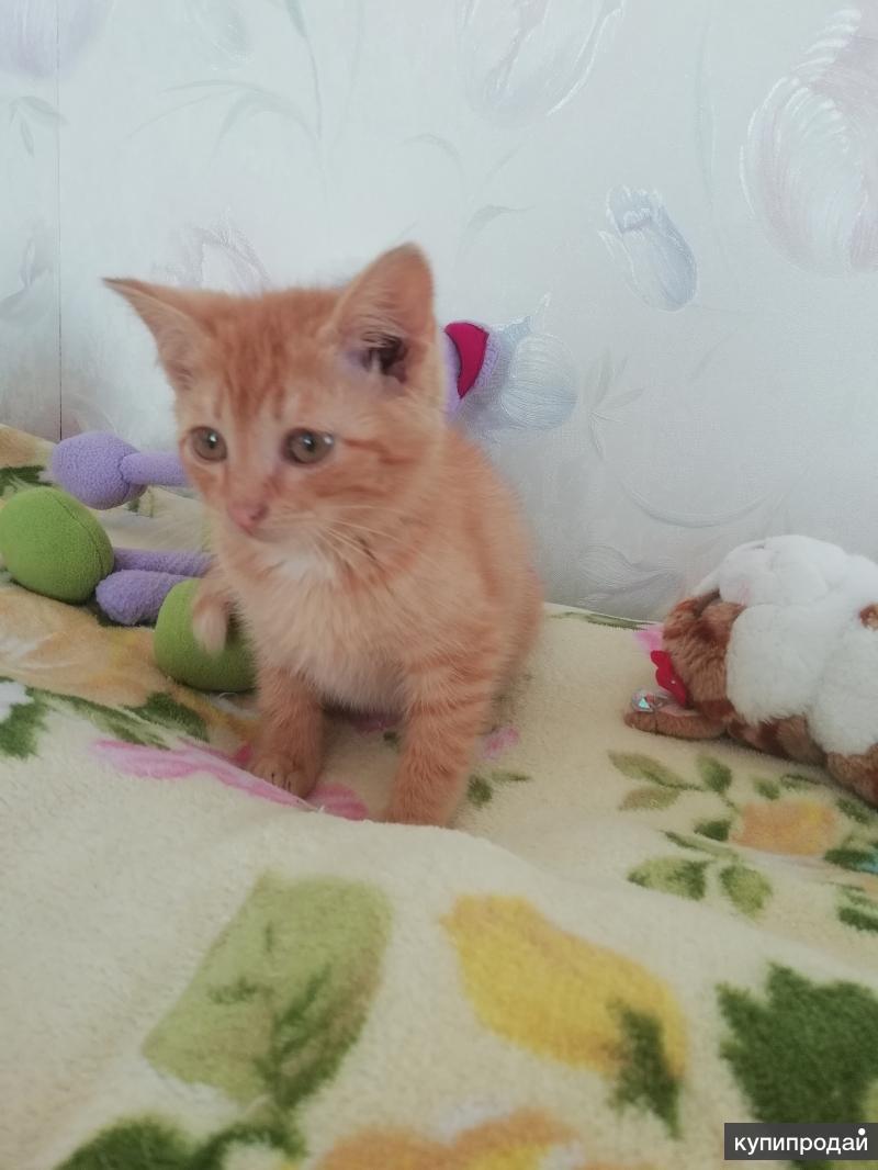 Котенок 2 с половиной месяца