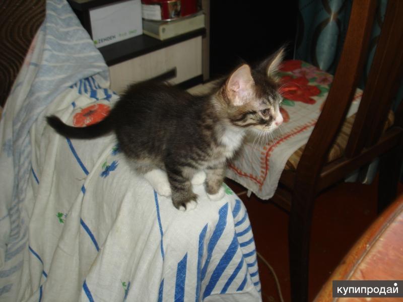 Котёнок Том
