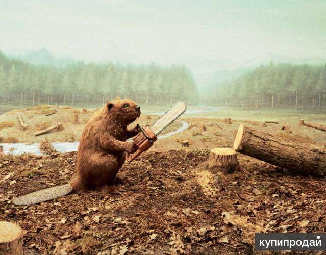 Профессиональный Спил, Деревьев Любой Сложности!