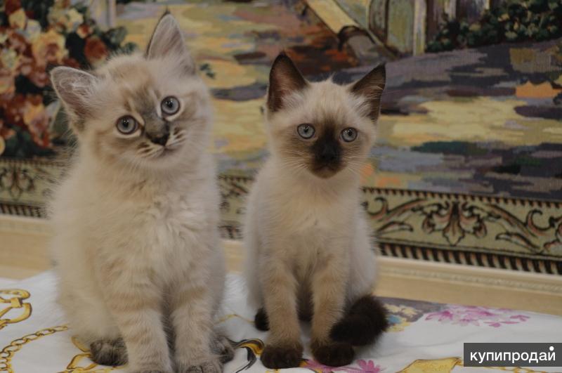 замечательные котята