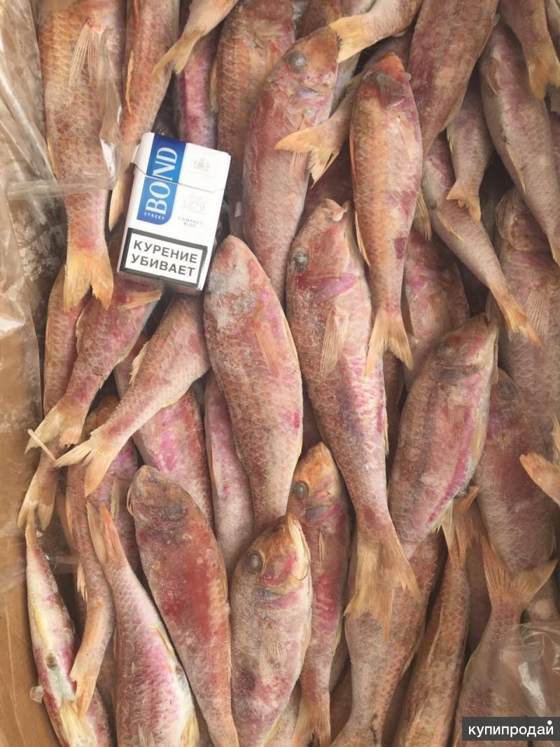 f0188271863c Свежемороженая рыба Барабулька Барабулька свежемороженая океаническая  размер 150+. Цена ...