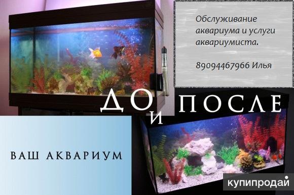 Обслуживание аквариума и услуги аквариумиста