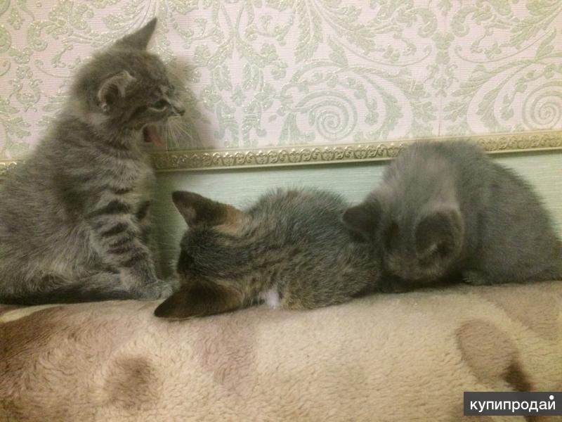 Мусечка и котята ищут добрых хозяев!