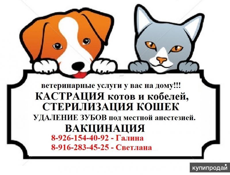 кастрация котов и кобелей,стерилизация кошек на дому недорого