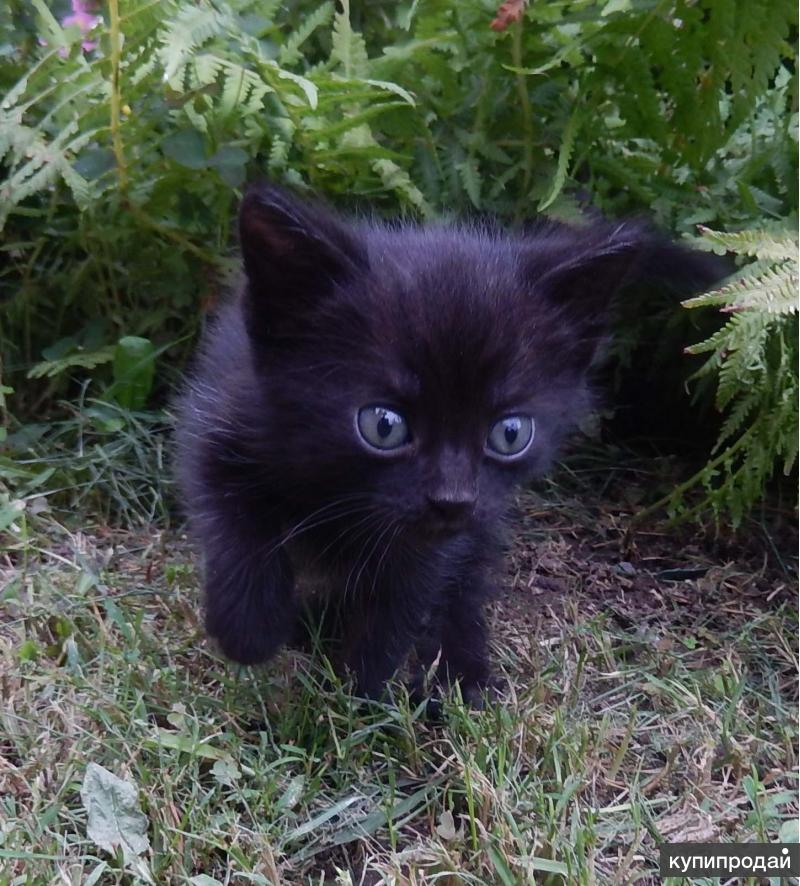 Котёнок чёрненький