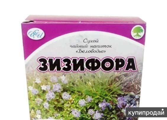 Зизифора пахучковидная, алтайский чай